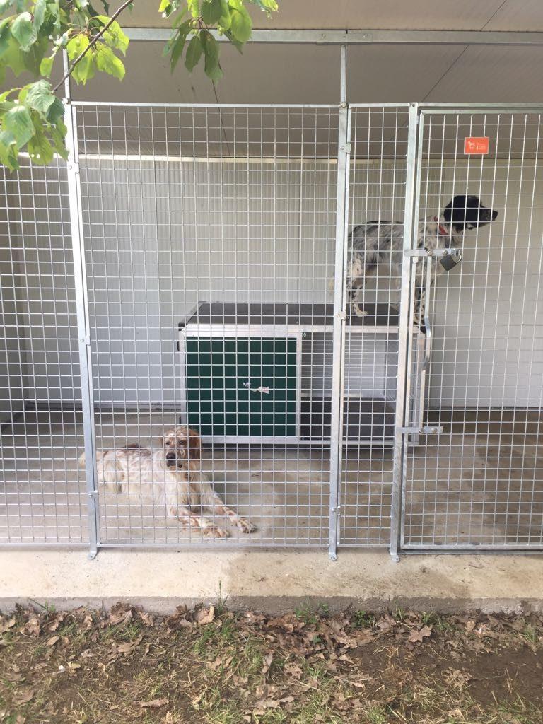 Box per cani singolo con parete coibentata e pvc retex for Retex box cani