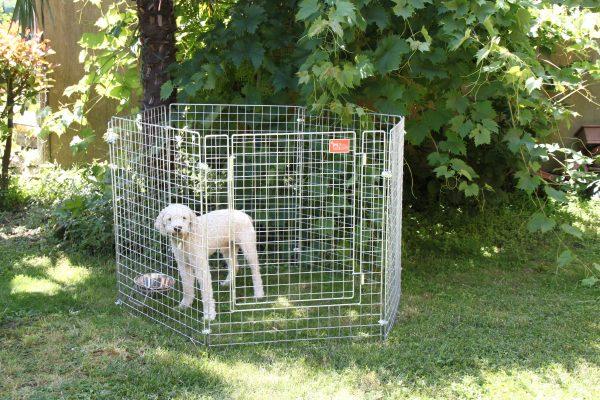 recinti cucciolata