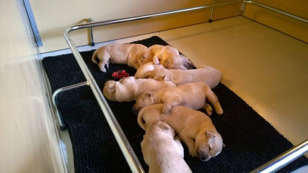 Casse parto per cani e cuccioli e cucciolate retex for Box parto per cani