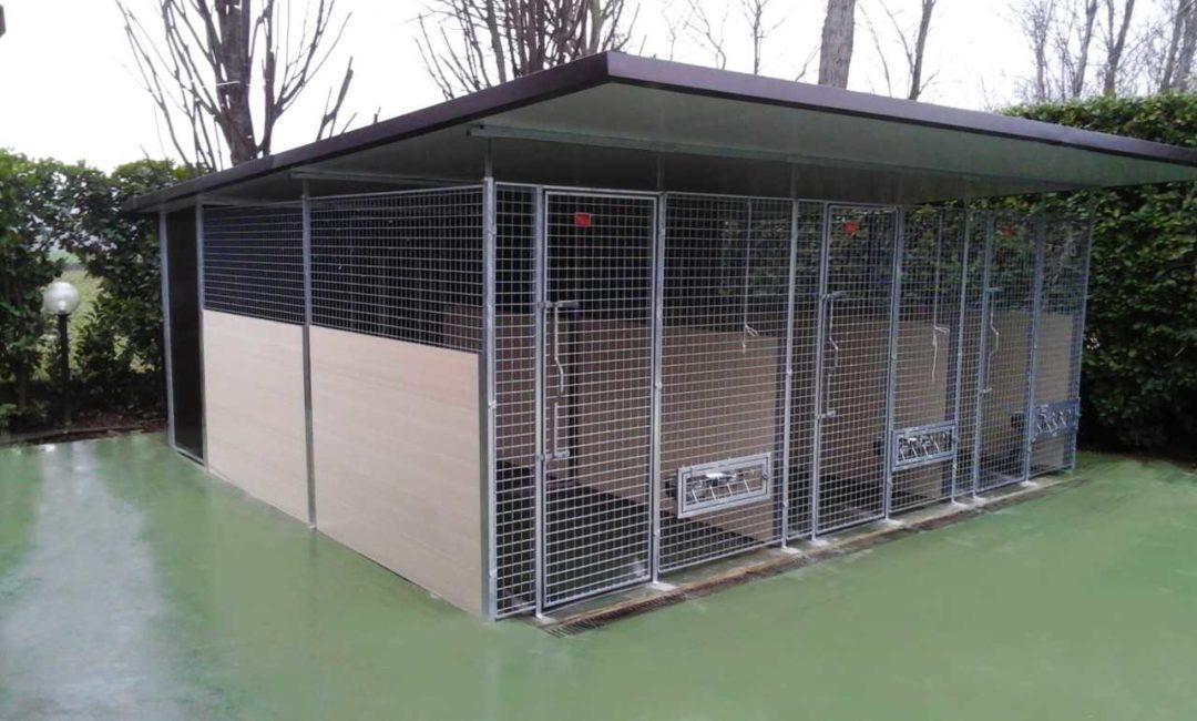box cani