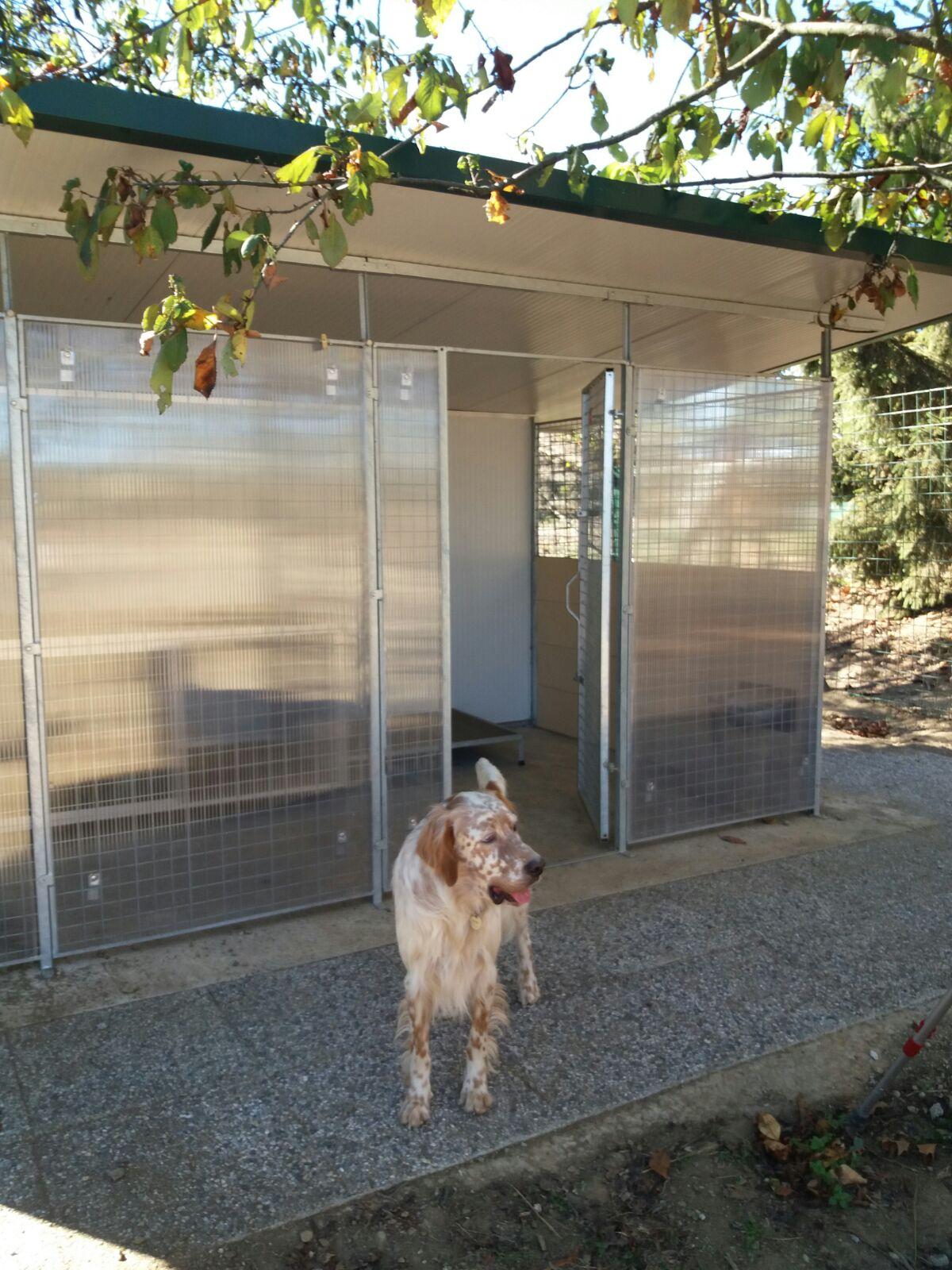 riparo per cani in policarbonato