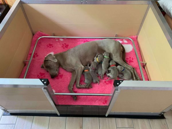 cassa parto con cuccioli
