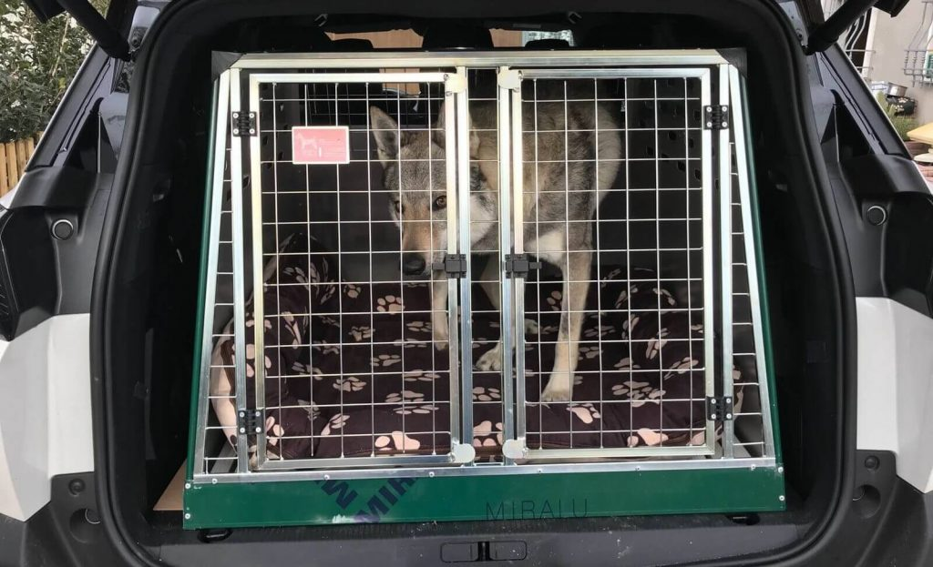 Immagine Articolo 'Regole da seguire per i trasportini da auto per cani'